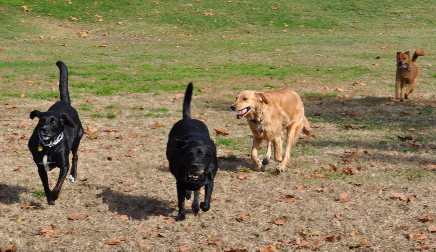 Webpage Design For A Dog Park